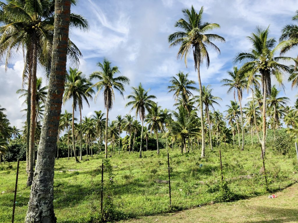 A photo of palm trees and a farm in Nuku'alofa