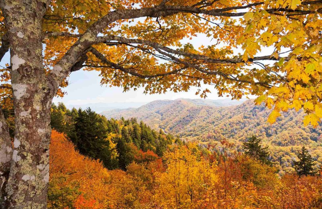 If you're looking to escape the big city on your weekend trip to Nashville, go to the Smoky Mountains.