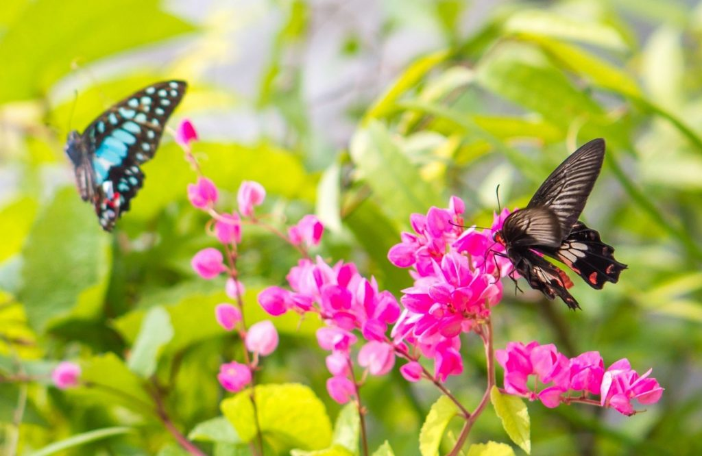 There are so many things to do in Aruba and visiting a butterfly farm is one of them.