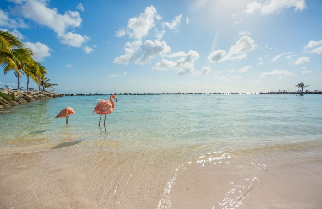 Hanging out with the flamingos at the Renaissance is one of many fun things to do in Aruba.