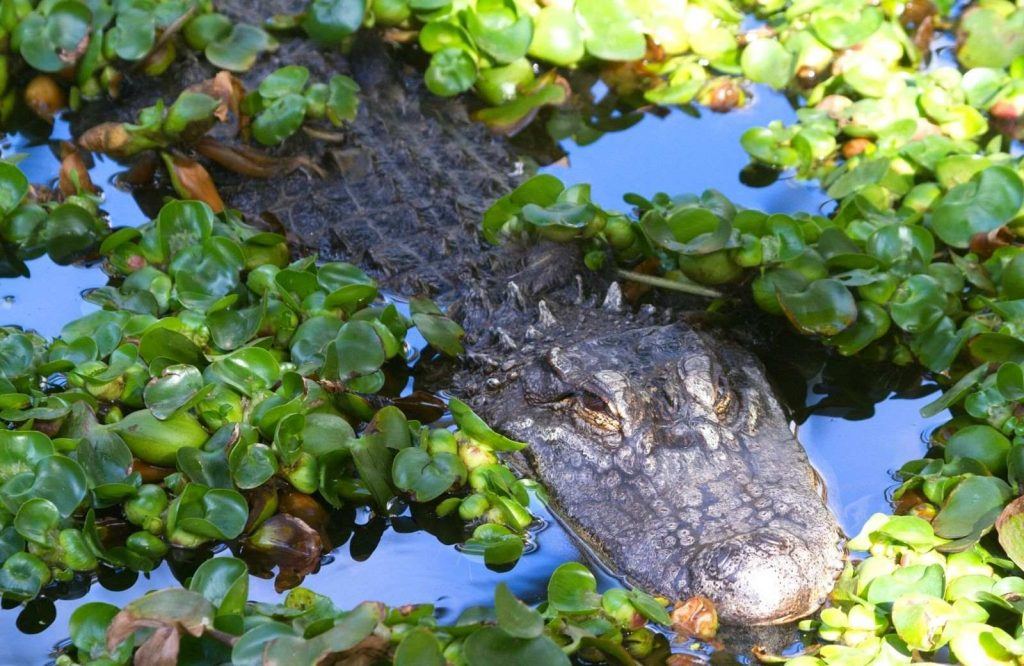 Everglades National Park is one of the most iconic stops on a Miami to Key West drive.
