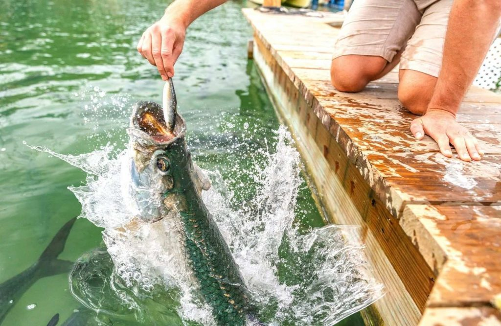 Robbie's Marina is a quirky place to stop on your Miami to Key West road trip.