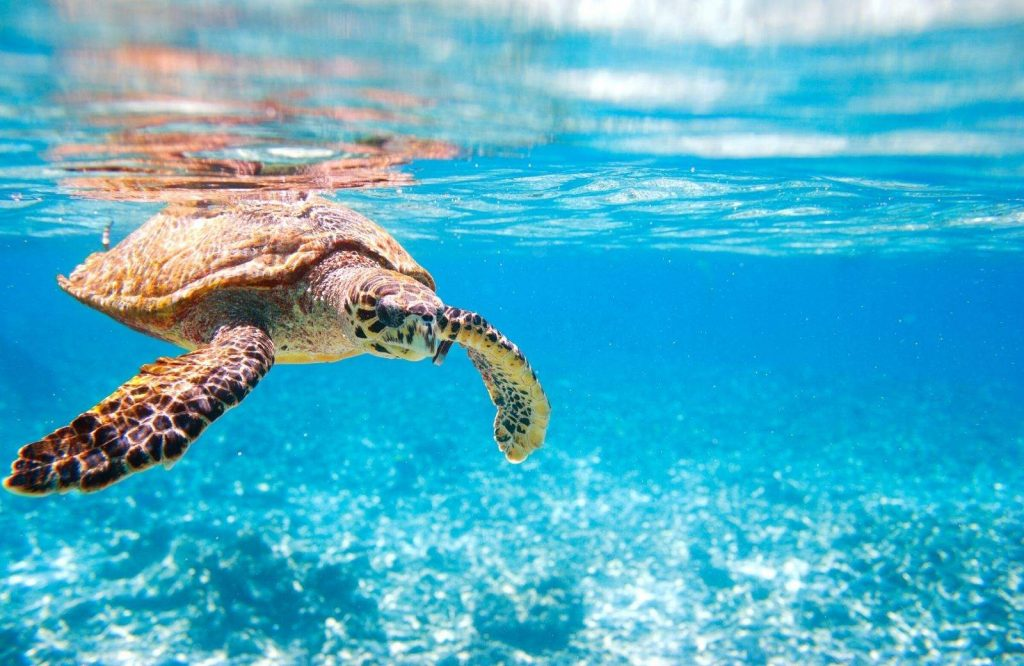 The Turtle Hospital is an absolute must on your Miami to Key West drive.