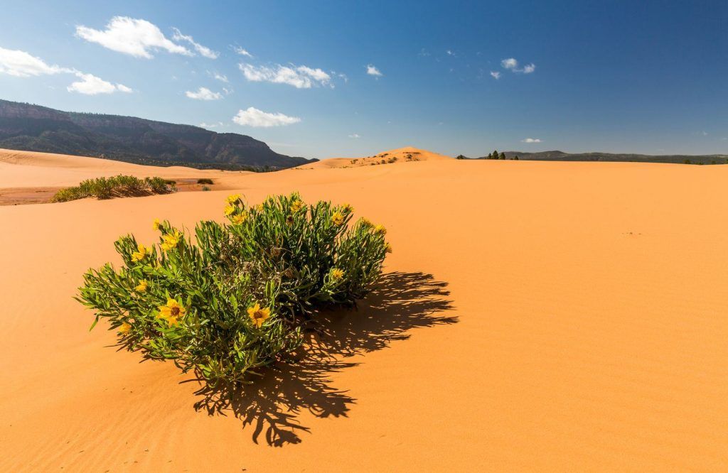 Coral Pink Sand Dunes National Park is one of the most amazing day trips from Las Vegas.