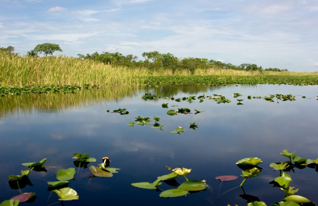 One of the best national parks on the East Coast is Everglades National Park.
