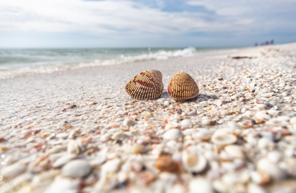 Add Sanibel Island to your list of the best islands in the USA.