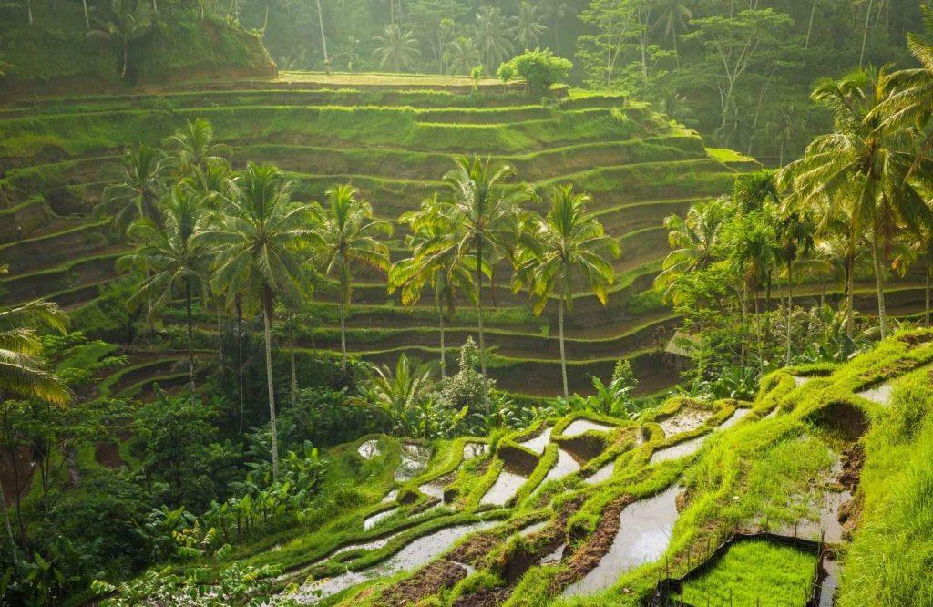 Ubud belongs on every Bali itinerary.