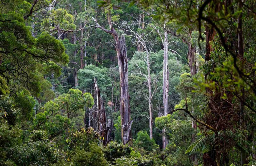 If you're looking for a more nature escape, the Dandenong Ranges are the perfect day trip from Melbourne for you.