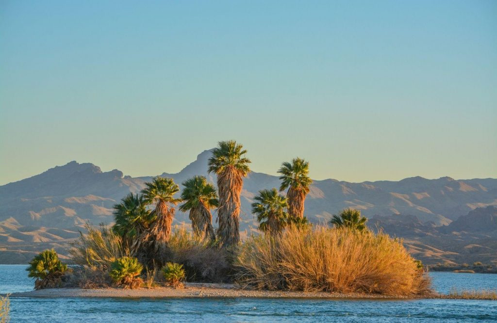 One of the best Route 66 attractions is Havasu National Wildlife Refuge.