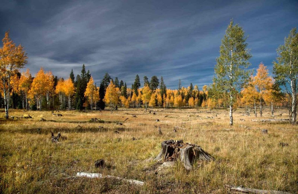 A list of Route 66 attractions wouldn't be complete without Kaibab National Forest.
