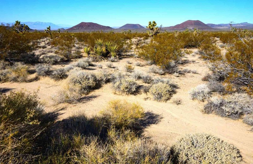 If you're looking for the best Route 66 attractions, visit Mojave National Preserve.