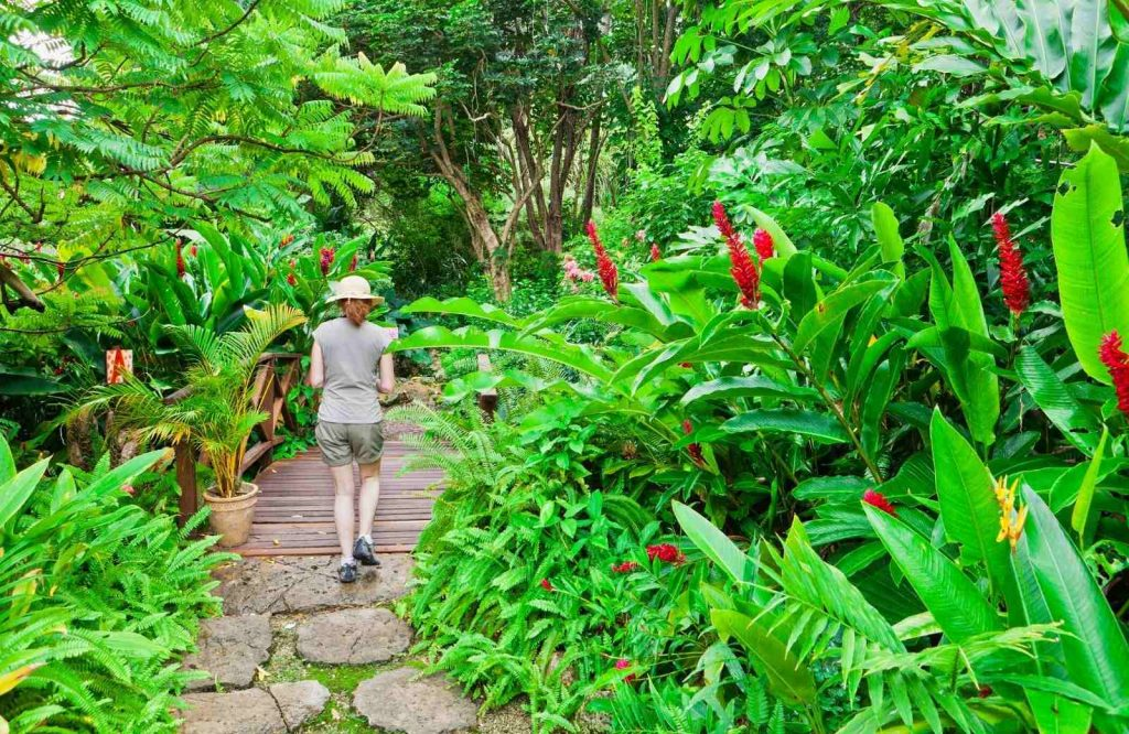 Add Andromeda Botanic Gardens to your list of things to do during your vacation to Barbados.