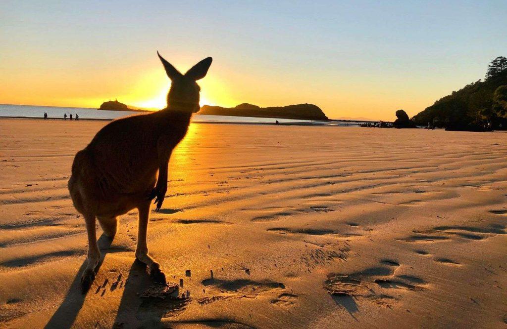 One of the best landmarks in Australia is Cape Hillsborough Beach.