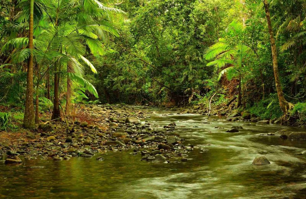 The Daintree Rainforest is one of the most prolific landmarks in Australia.
