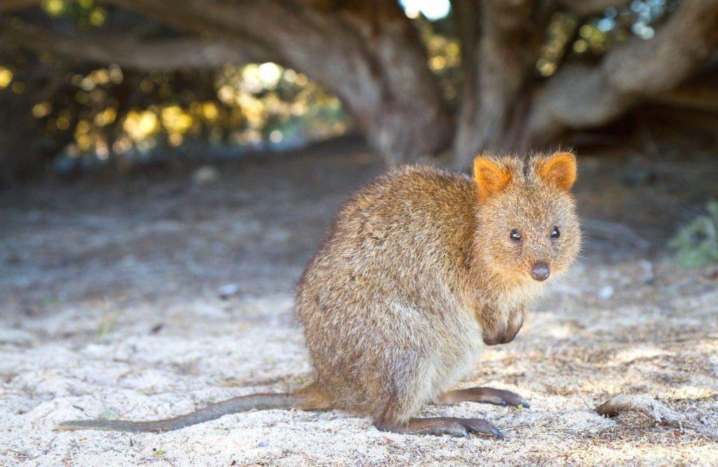Rottnest Island is one of many incredible landmarks in Australia.